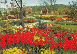 B108732 Netherlands Holland in Bloementooi Flowers Tulips Fleurs