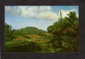 PR National Forest Nurseries Trees El Yunque Puerto Rico Postcard Care Postale