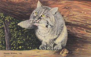 Florida Wildcat