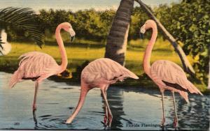 Birds Flamingos Feeding At Rare Bird Farm Miami Florida
