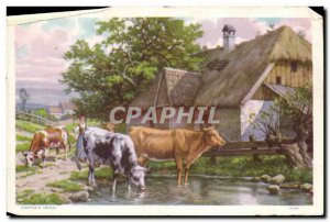 Document format postcard Cows