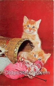 Knitting Time Color Photo by Ralp Crowell Associates Postcard Post Card Color...