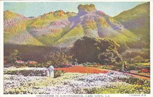 South Africa Cape Town Springtime in Kirstenbosch