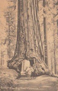 CALIFORNIA , 00-10s ; People on horseback coming through The Big Tree Wawona