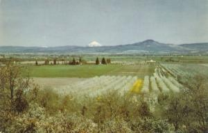 Pear Orchards in Rogue River Valley, Oregon