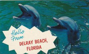 Florida Hollywood Hello From Delray Beach Smiling Florida Porpoise