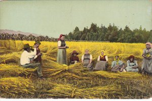 Harvest Scene Hay Making