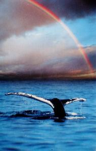 Whale Watching near Cape Ann, Massachusetts