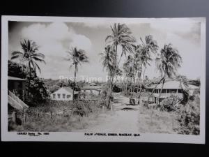 Australia EIMEO Palm Avenue MACKAY QUEENSLAND - Old RP Postcard by Sidues Series