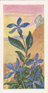 Glengettie Trade Card Wild Flowers No 11 Periwinkle