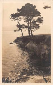 Pebble Beach California Vine Tree Point Real Photo Antique Postcard J71445