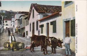 Portugal Madeira Corca de Bois