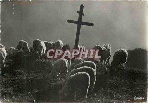 Modern Postcard Peace on Alpe Lambs Sheep