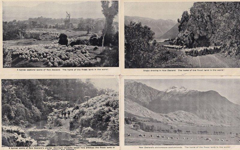 New Zealand Crystal Mountain Stream Sheep 4x Antique Postcard s
