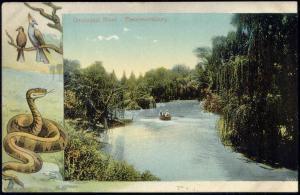 south africa, PIETERMARITZBURG, Umsindusi River, Snake (1909)
