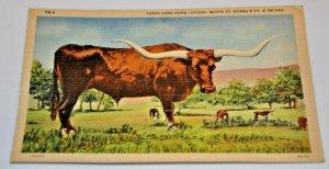 Texas Long Horn Width 1930-1945 Barton's News Agency Temple Bull Steer Cows