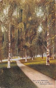 Petoskey Michigan~GR&I Park~Cut Leaf Birches~1913 Postcard