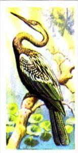 Brooke Bond Trade Card Tropical Birds No 35 Indian Darter