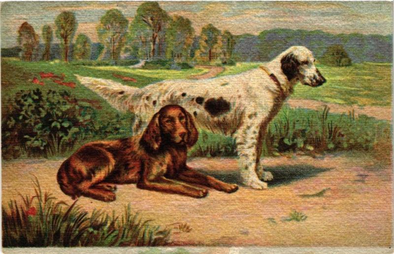CPA Irish Setter and English Setter DOGS (727378)