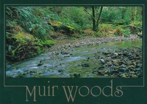 Beautiful Redwood Creek In Muir Woods California