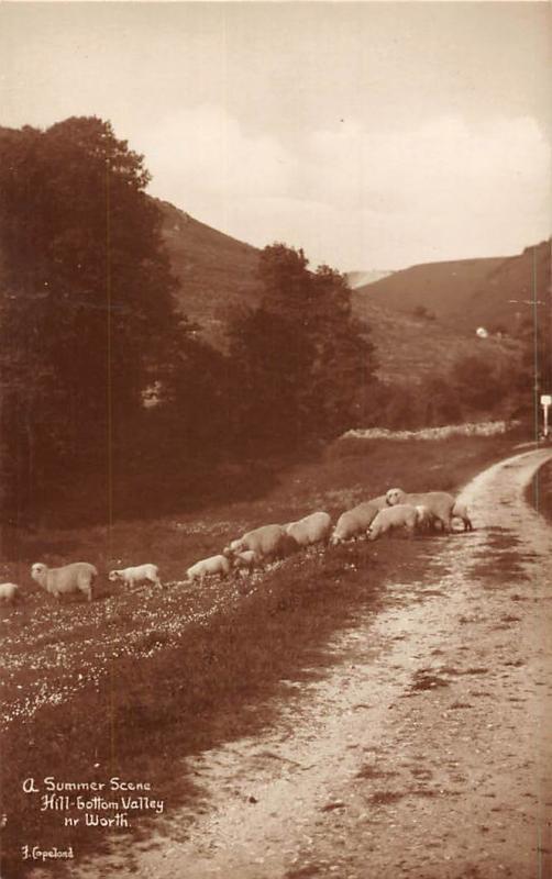 A Summer Scene Hill Gottom Valley Nr. Worth Sheeps Road