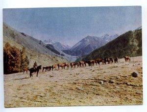 238938 Kyrgyzstan near Issyk-Kul lake HORSES pasture old