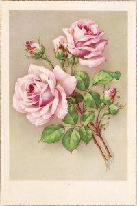 Beautiful roses lNice spanish postcard 1950s