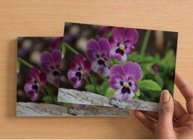 Handmade Postcard Set of 6, Duo Tone Purple Pansies And Rustic Wood