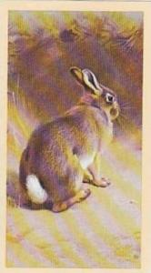 Grandee Vintage Cigarette Card British Mammals 1986 No 26 Rabbit