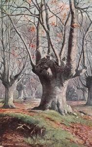 TUCK # 6219 Series , England , 1900-10s ; BURNHAM BEECHES #4