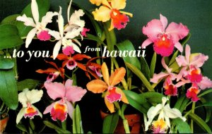 Hawaii Orchids To You From Hawaii