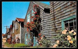 Roses on Bearskin Neck Rockport, Massachusetts Postcard