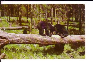 Bear and Cub, Greetings from Lexington Heights, Michigan, Used 1960