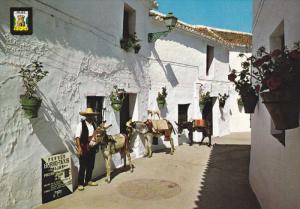 MILAS, Costa del Sol, Malaga, Donkeys, Andalucia, Spain, 50-70s