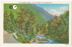 Roadway Scene In The Heart of The Mountain Vintage Postcard