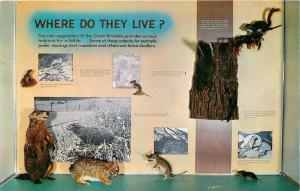 Gatlinburg TN~Sugarlands Visitor Center~Where Do Various Animals Live?  ~1950
