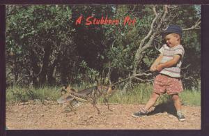 A Stubborn Pet Exaggerated Grasshopper Post Card 2680