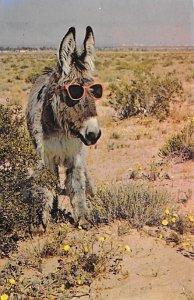 Donkey with Sunglasses California, USA Burro 1984 Missing Stamp