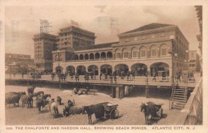 The Chalfonte & Haddon Hall & Beach Ponies, Atlantic City, NJ, Used in 1924