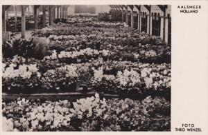 RP; AALSMEER, North Holland, Netherlands; Auction of potplants just before Ch...