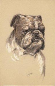 AS: Portrait of English Bulldog Dog, 1900-10s