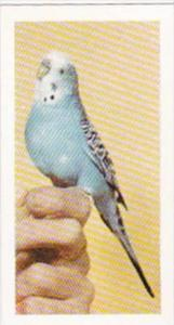 Hornimans Tea Trade Card Pets No 21 Budgerigar