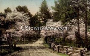 Springtime Southern Pines NC 1938