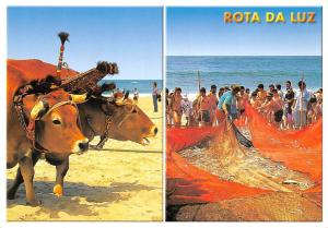 Portugal Rota da Luz Arte Xavega Aveiro Costa de Prata, bovine oxen beach