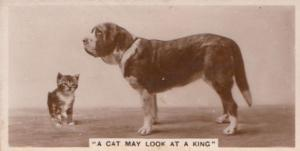 Cat Looking At A King Dog German Antique Real Photo Cigarette Card