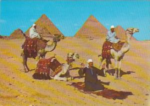 Egypt Giza Arab Camel Riders In Front Of The Pyramids