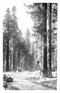 RPPC Lost Grove Entrance, Sequoia National Park, CA c1950s Vintage Postcard