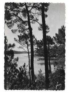 France Lac Marin Hossegor Landes View Thru Pines Glossy YVON 4X6 Photo Postcard