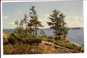 Georgian Bay Pines Among 30000 Islands, Parry Sound, Ontario,