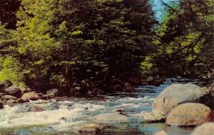 Big Moose New York~Moose River (Outlet)~Adirondack Mountains~1960s Postcard